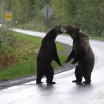 """დათვების """"ხიპიში""""- ვიდეო"""