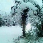 თოვლიანი შემოქმედი დღეს - ვიდეო
