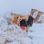 საჰარის უდაბნოში თოვლი მოვიდა [PHOTOS]