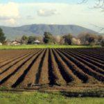 მთავრობა მიწის რესურსებს აღრიცხავს და ერთიან ბაზას შექმნის