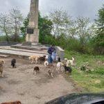 გაიცანით გოგო, რომელიც ყოველ დღე ნასაკრალში დადის და მიუსაფარ ძაღლებს კვებავს